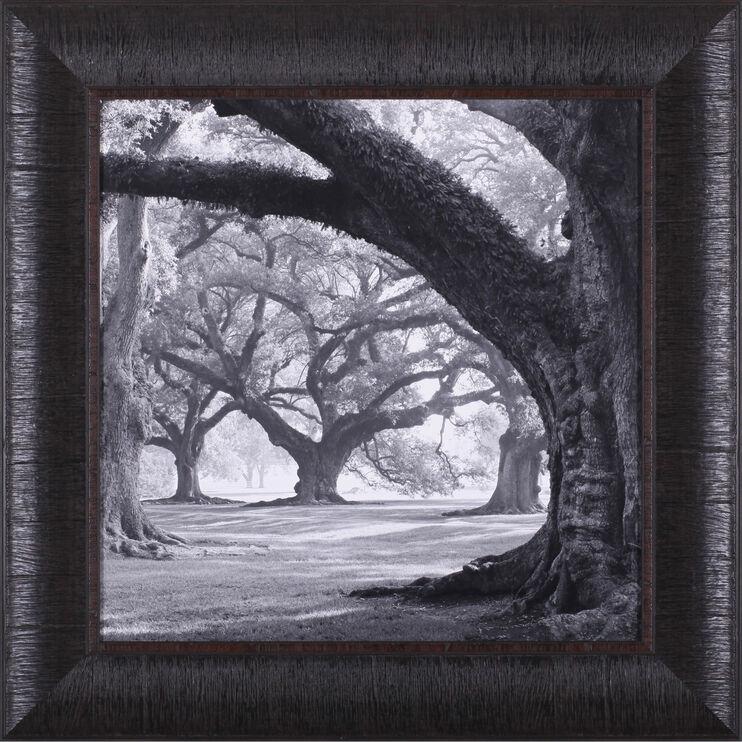 Oak Alley West Row Framed Art