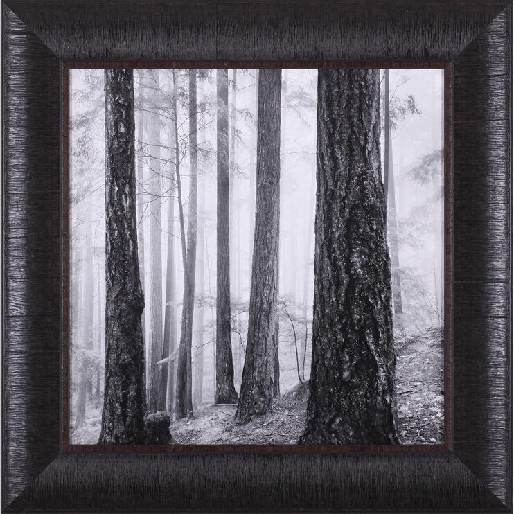 Capilano Forest Framed Art