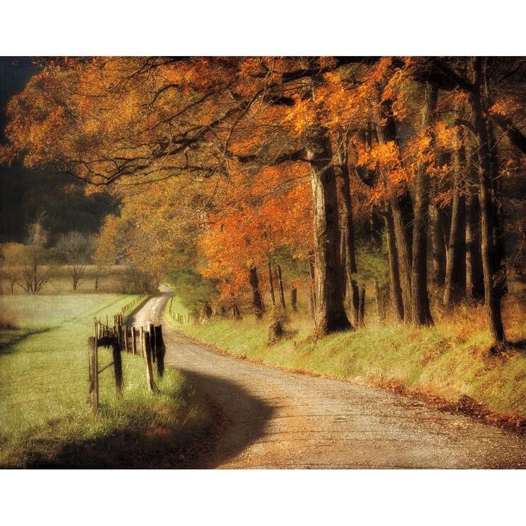 Autumn's Morning Light Framed Art