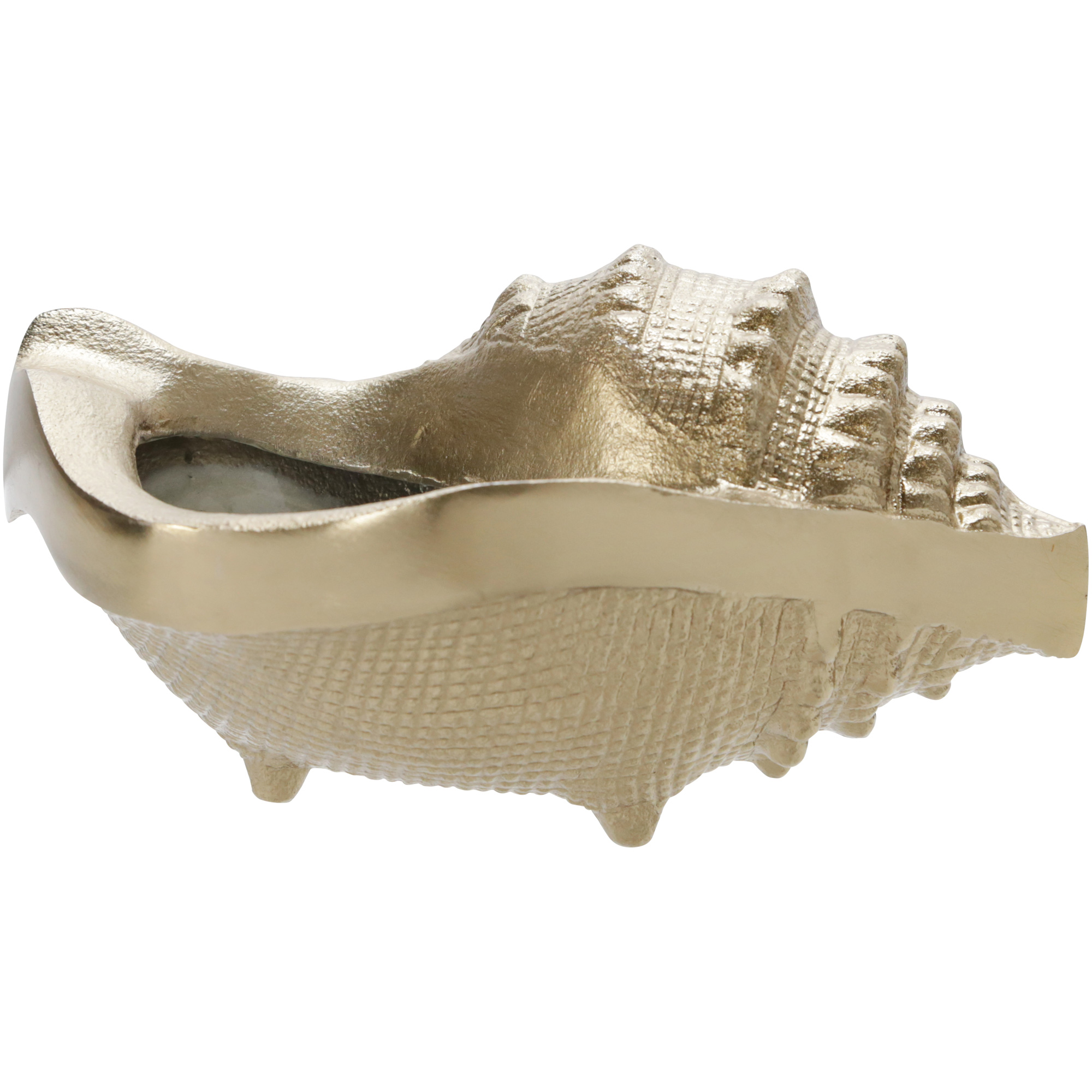 Sagebrook | Elevated Chic Champagne Sea Shell